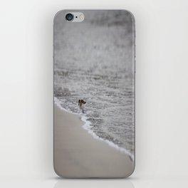 Lonely Sandpiper iPhone Skin