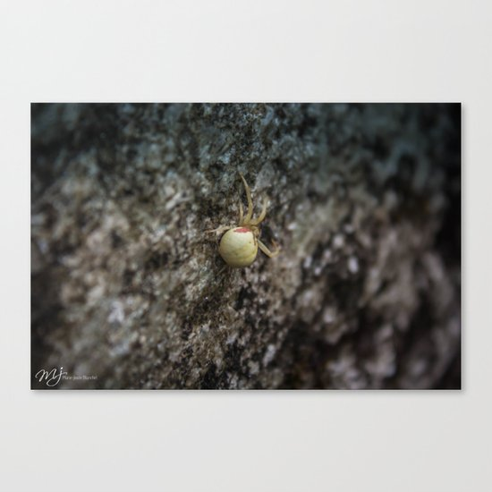 Yellow Spider Canvas Print