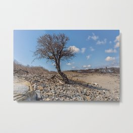 Beach Tree Metal Print