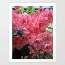 Pink flower in Butchart's garden Art Print