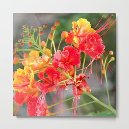 Delicate and tropical Metal Print