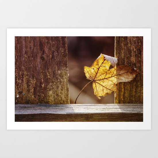 catching warmth Art Print