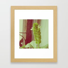 Fittonia Framed Art Print
