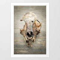 Lynx Skull Art Print