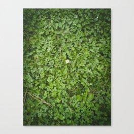 Paseo con la blanca flor Canvas Print