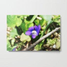 Violet 02 Metal Print
