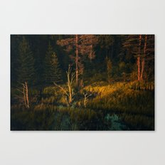 Drying out in the sun Canvas Print