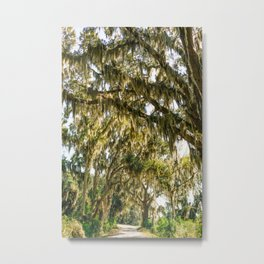 Savannah National Wildlife Refuge V Metal Print