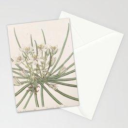 Flower 039 ornithogalum nanum Dwarf Star of Bethlehem28 Stationery Cards