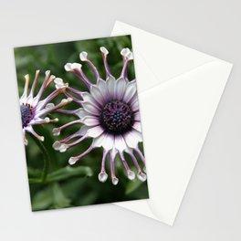 Pair of Osteospermum Stationery Cards