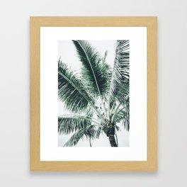 Maui Paradise Palm Hawaii Framed Art Print