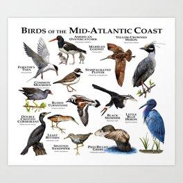 Birds of the Mid-Atlantic Coast Art Print