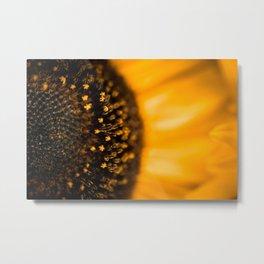 Inside of a Sunflower Metal Print