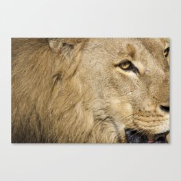 """""""I'm Not Comfortable with This"""" Canvas Print"""
