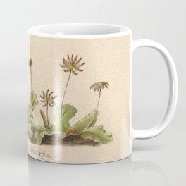 Antique Moss Lithograph Coffee Mug