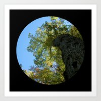 Trees from below 4 Art Print