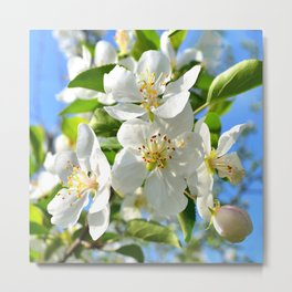 Apple Blossoms | Nadia Bonello Metal Print