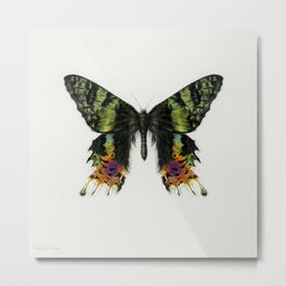 Colorful Madagascan Sunset Moth Metal Print