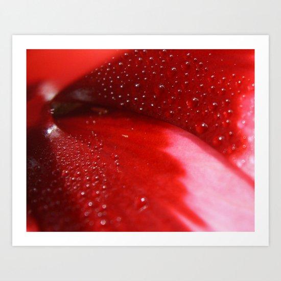 Dew on Petal fine art photography Art Print