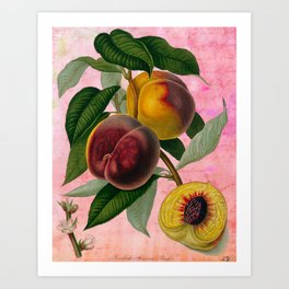 Vintage Botanical Collage, Bradford Peach Art Print