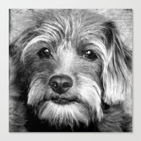 coco Canvas Prints featuring COCO by KarenHarveyCox