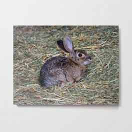 Surprised Rabbit Metal Print