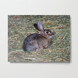 Surprised Rabbit Metal Print