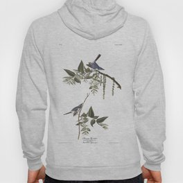 Bluegrey flycatcher working, Birds of America, Audubon Plate 84 Hoody