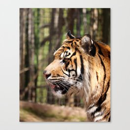 Attention Canvas Print