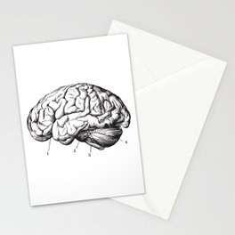 Human Brain Sideview Anatomy Detailed Illustration Stationery Cards
