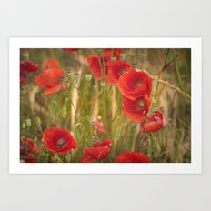 Poppies...... Art Print
