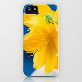 Yellow Globeflower - Golden Queen Trollius x Cultorum 4 iPhone Case