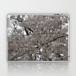Tidal Basin Blossoms Laptop & iPad Skin