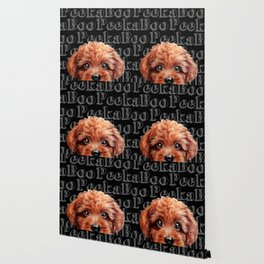Peek A Boo, Toy poodle, redish brown tone Wallpaper
