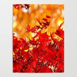 RED AND ORANGE AUTUMN Poster