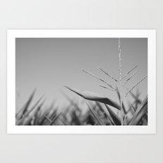 Corn Top Art Print