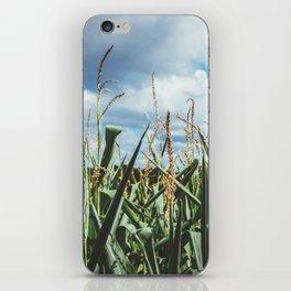 Green yellow Corn field blue sky clouds iPhone Skin
