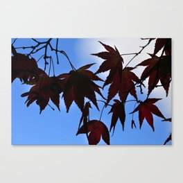 Silhouette Maples Canvas Print