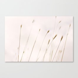 Tall grass against cloudy sky Canvas Print