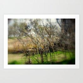 Brushwood Art Print