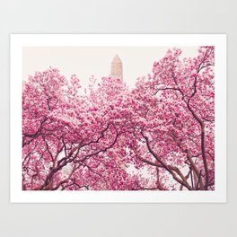 New York City - Central Park - Cherry Blossoms Art Print