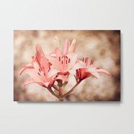 Flowering Lilium plant sepia toned Metal Print