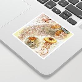 SEA CREATURES COLLAGE-Ernst Haeckel Sticker