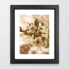 white blossoms on a tree. Framed Art Print