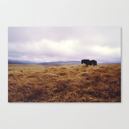 Wandering Horse Canvas Print