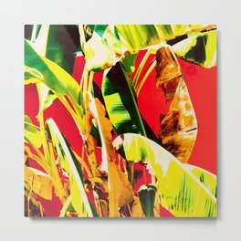 Banana Tree and Red Metal Print