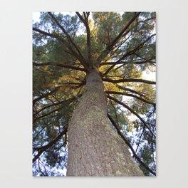 Rainbow Tree Canopy | Woods Canvas Print