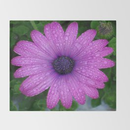 Purple African Daisy with Raindrops Throw Blanket