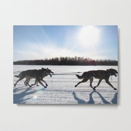 Sled Dogs Metal Print