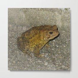 Mr. Toad Metal Print